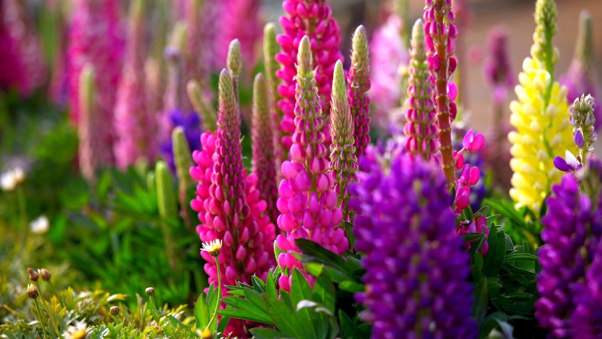 цветники в сочи